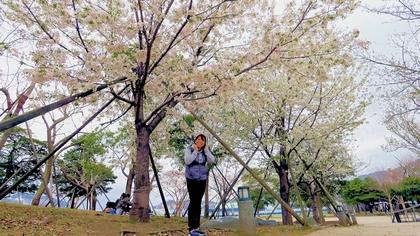 水辺の森公園の桜